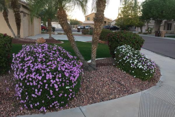 Expert Residential Landscaper Quality Care Landscape