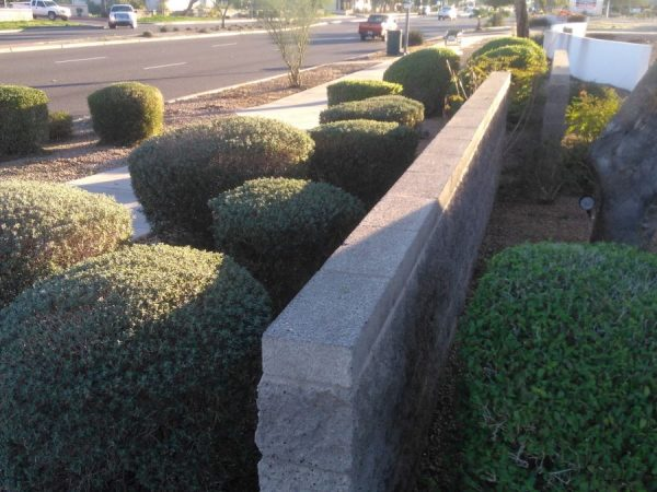 Phoenix Commercial Landscaping