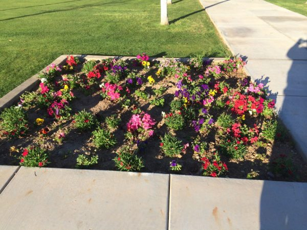Quality Care Landscape Management Residential Landscaping